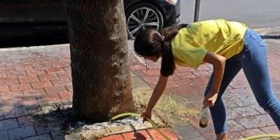 Antalya'da 30 Yıllık Çınar Ağacına Asit mi Döküldü