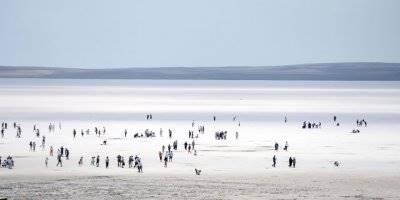 Tuz Gölü'ne Yoğun İlgi