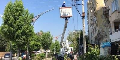 Ağaçlardaki Elektrik Tehlikesine Budamalı Çözüm