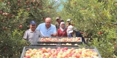 Karamanlı Elma Üreticileri Hasada Başladı