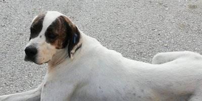 Antalya Serik'te Sokak Köpeği Dehşet Saçtı