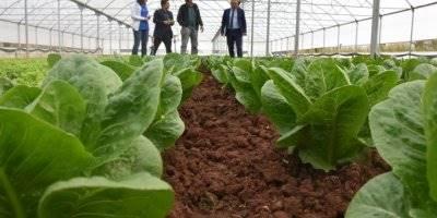 Aksaray'da Sera Projeleri Üreticinin Yüzünü Güldürüyor