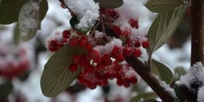Karaman'da Kar Yağışı Şehirler Arası Ulaşımı Aksatıyor