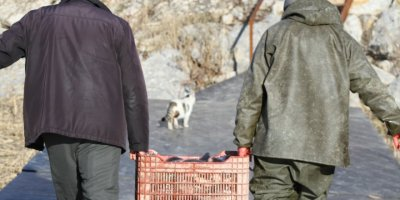 Beyşehir'de Sokak Kedilerinin Balık Mesaisi