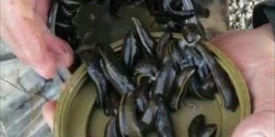 Beyşehir Gölü'nde Yasa Dışı Sülük Avına Para Cezası