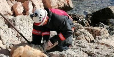 Silifke İtfaiyesinden Başı Sıkışan Köpeğe Kurtarma Operasyonu