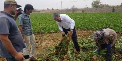 Konya Şeker'in Toplam Pancar Bedeli Ödemesi 1,1 Milyar Tl'ye Ulaştı