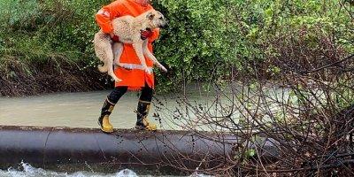 Mersin'de Derede Mahsur Kalan Köpeği İtfaiye Kurtardı