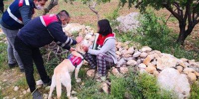 Mut'ta kaybolan Kız Çocuğu Ormanlık Alanda Bulundu