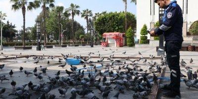 Mersin'in Boş Kalan Yollarında Kuşların Yem Mücadelesi