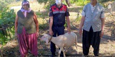 Koyunları Bulunan Vatandaş Çifte Bayram Yaşadı