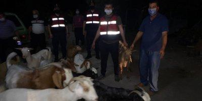 Antalya'da Kaybolan Küçükbaş Hayvanlar Jandarma Ekiplerince Buldu