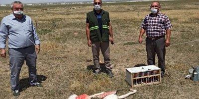 Konya'da Flamingo Ve Sunu Kuşu Avı Yapan Kişiye 13 Bin 237 Lira Ceza