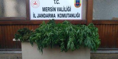 Mersin'de Hint Keneviri Yetiştiren Bahçıvan Tutuklandı