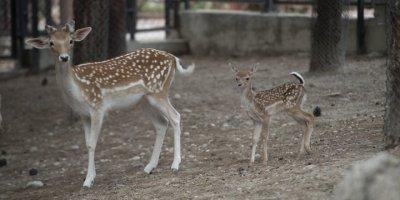 Tarsus Doğa Parkı'nın Sevimli Misafirleri