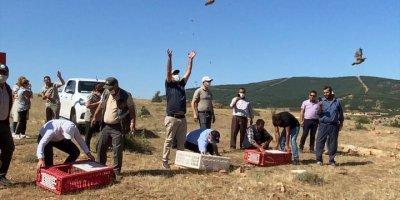 Hüyük'te Doğaya 500 Kınalı Keklik Salındı