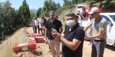 Derebucak'ta Doğaya 500 Kınalı Keklik Salındı