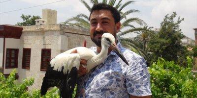 Mersin'de Uçamayan Leylek Yavrusu Tedavi Edildi