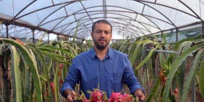 Ejder Meyvesi Üreticileri Satışlardan Memnun