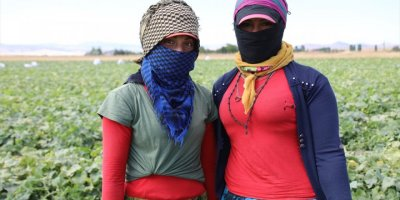 """""""İç Anadolu'nun Çukurovası"""" Mevsimlik İşçilerin Ekmek Kapısı"""