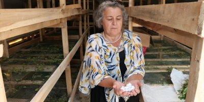 Başkent'in Hengamesinden Kaçıp Ermenek'te Üretici Oldular