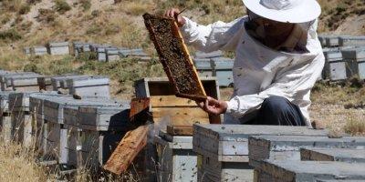 Kaliteli Bal Üretimi İçin Erciyes'e Geliyorlar