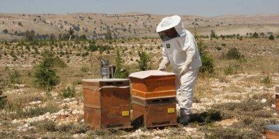 Organik Bal İçin Toros Dağlarının Zirvesindeki Mesai Sürüyor