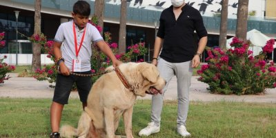 """Antalya'da Hayvanseverlerin Buluştuğu """"Petzoo"""" Fuarı Sona Erdi"""