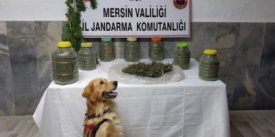 Mersin'de Sera Ve Ahırında Uyuşturucu Ele Geçirilen Zanlı Tutuklandı