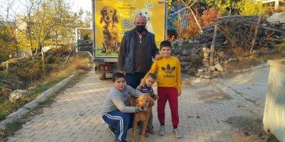 Mersin'de Tüfekle Vurularak Yaralanan Köpek Tedavi Edildi