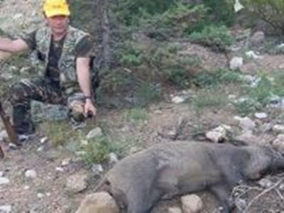 Karaman'da Yaban Domuzu Avları Devam Ediyor