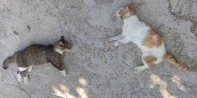 Mersin'de Zehirlendikleri İddia Edilen 13 Kedi Telef Oldu