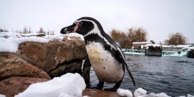 Eskişehir Hayvanat Bahçesi'nin Ev Sahipleri Karın Keyfini Çıkarıyor