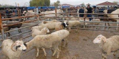 Niğde'de Canlı Hayvan Pazarı Şap Hastalığı Nedeniyle Kapatıldı