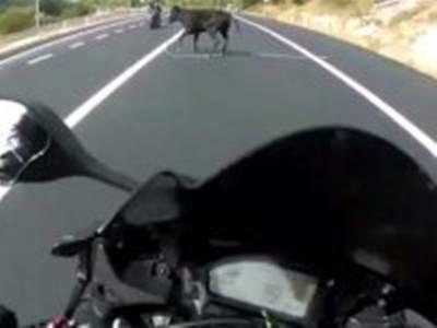 Karamanlı Motosikletlinin İnekle İmtihanı