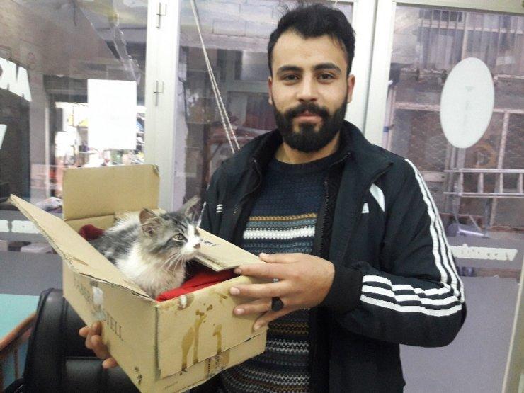 Mersin'de Yavru Kediyi Donmaktan Kurtardı