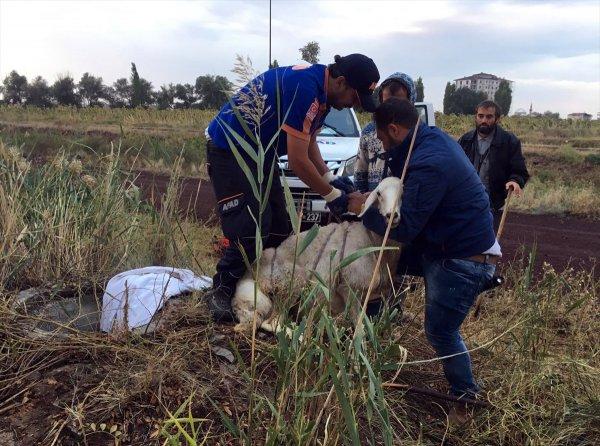 Aksaray'da Kuyuya Düşen Koyun Kurtarıldı