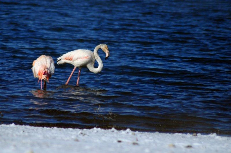 Kış İvriz Baraj Gölü'ndeki Flamingoları da Vurdu