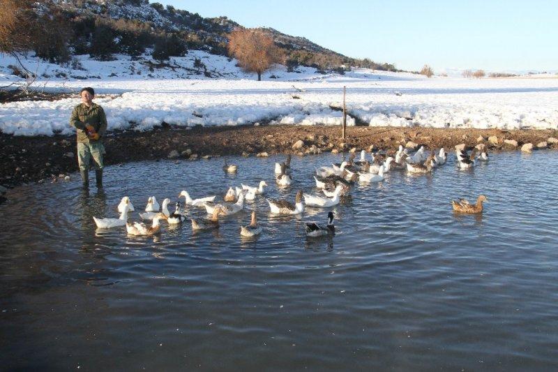 Üniversiteli Besici Kazlı Ördekli Çiftliğinde Hayvanlarının Çobanlığını Yapıyor
