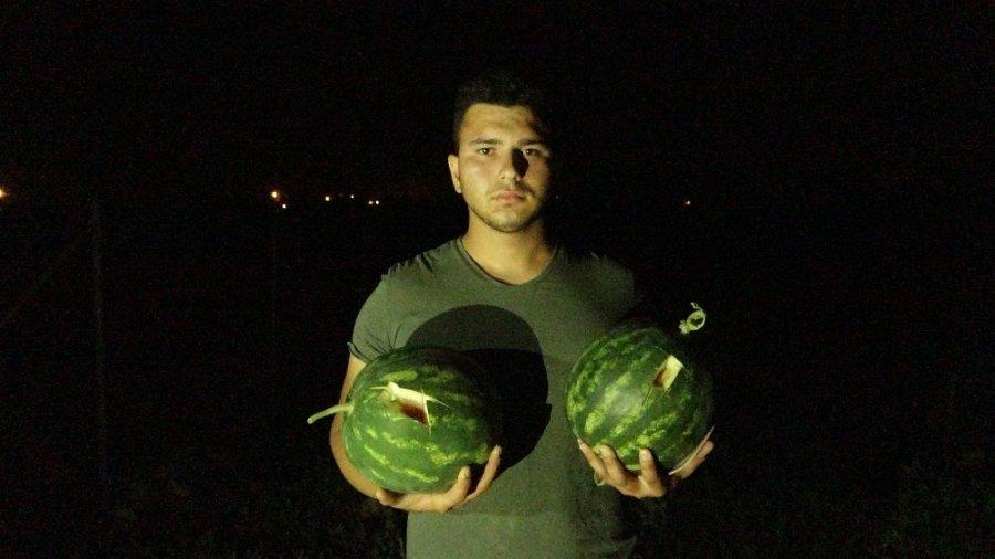 Antalya'da Karpuz Tarlasından Seçmece Hırsızlık