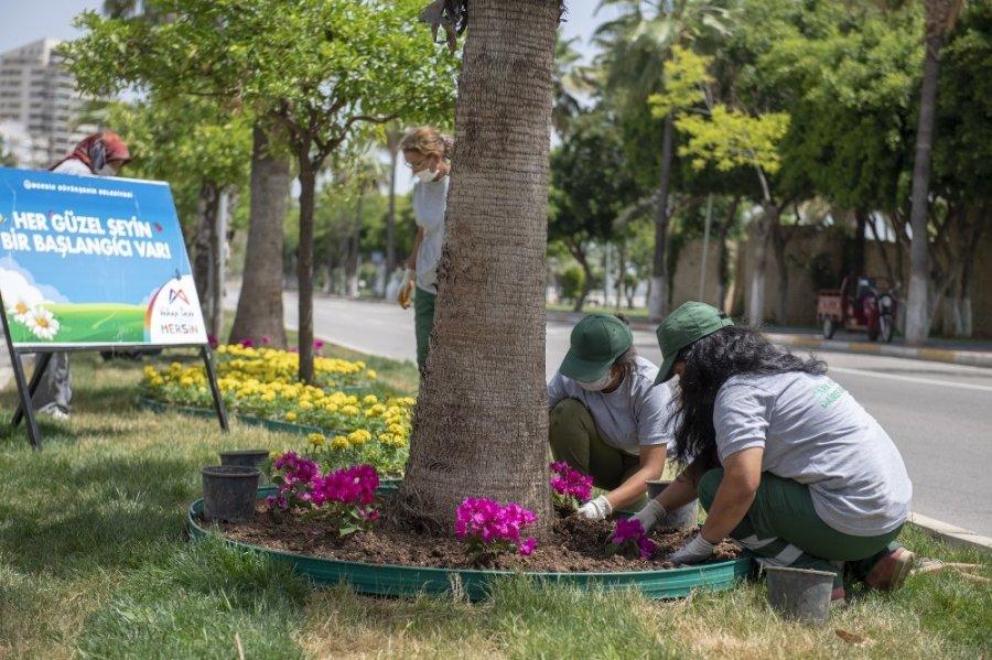 Mersin'de Çiçekler Açıyor