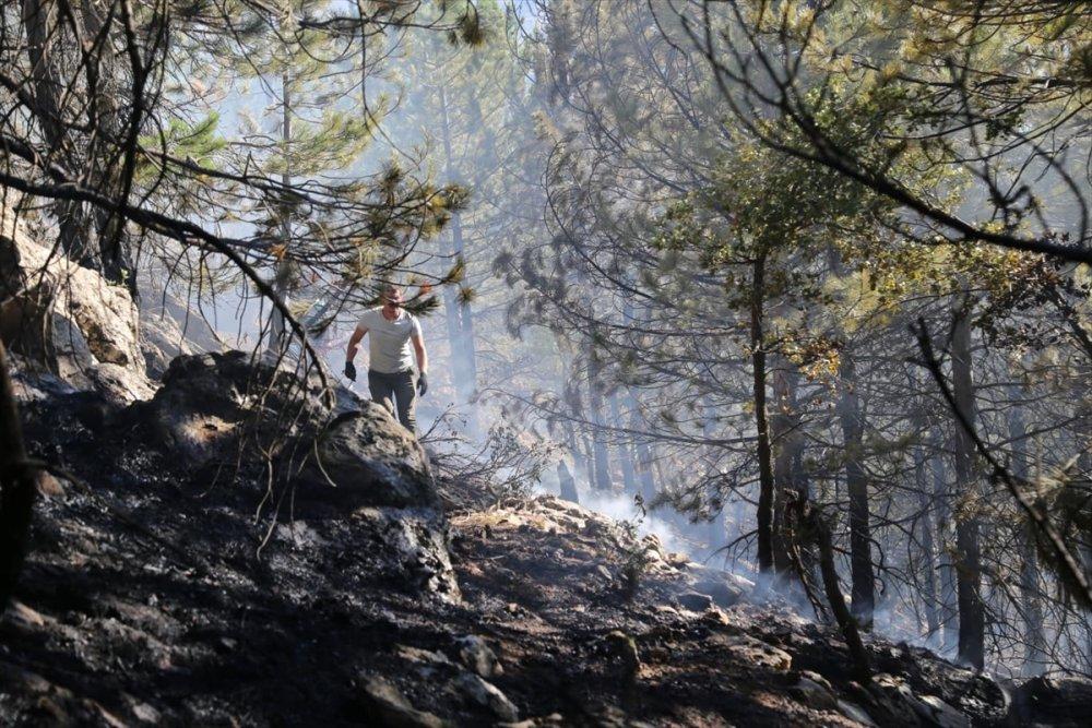 Konya Taşkent'te Orman Yangını