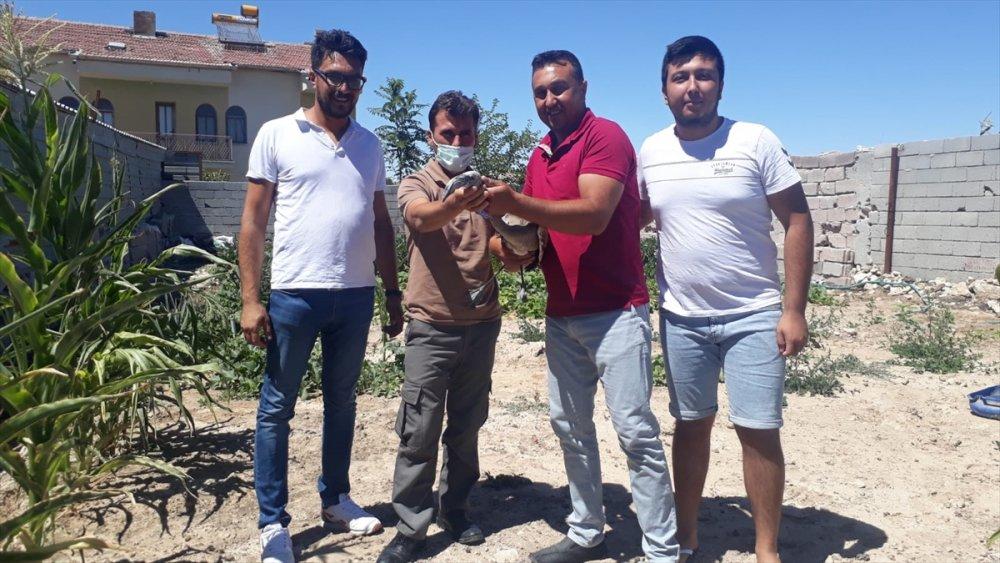 Aksaray'da Yaralı Flamingolar Tedaviye Alındı