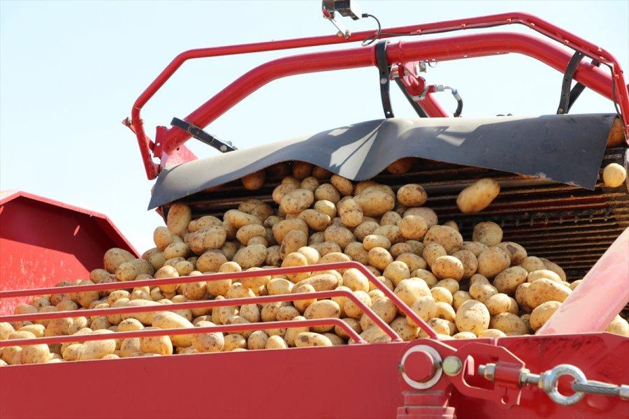 Niğde'de Patates Hasadı Devam Ediyor