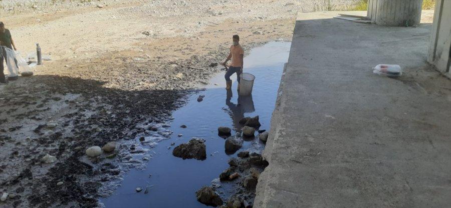 Antalya'da Su Birikintisinde Kalan 50 Bin Balık Kurtarıldı