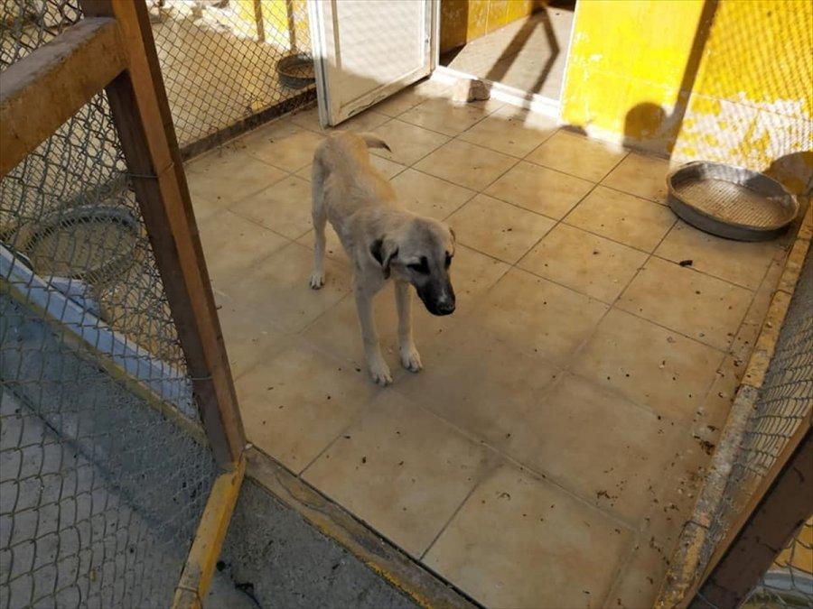 Niğde'de Kuyuya Düşen Köpeği Afad Ekipleri Kurtardı