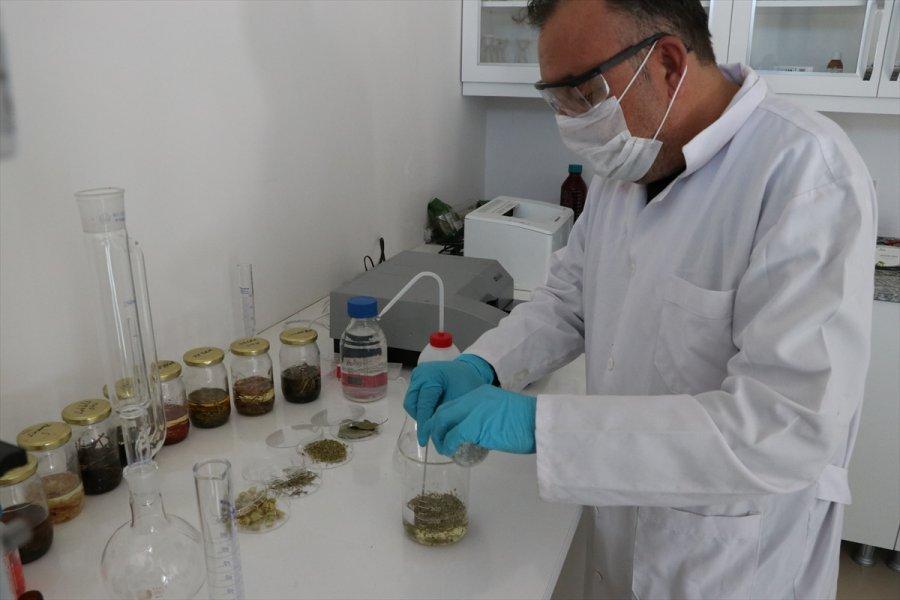 Aromatik Bitki Yağlarının Etken Maddesinden Takviye Edici Gıda Üretildi