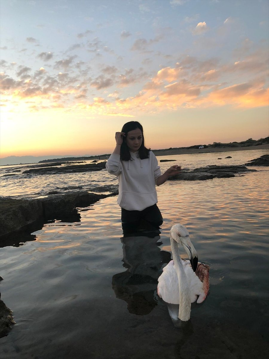 Antalya'da Yaralı Bulunan Flamingo Koruma Altına Alındı
