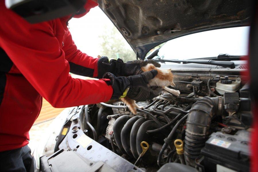 Mersin'de Art Arda 4 Aracın Motor Bölümüne Giren Kedi Yavrusu Kurtarıldı