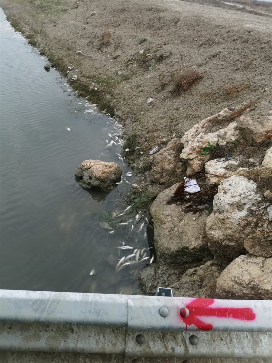 Mersin'de Balık Ölümlerine İlişkin İnceleme Başlatıldı